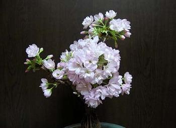 asahiyama150214b.jpg