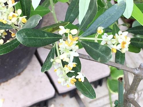 olive29may2017.jpg