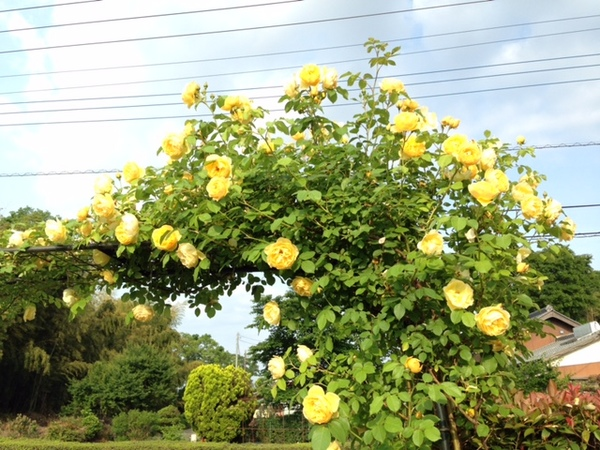 tomasu14a.jpg