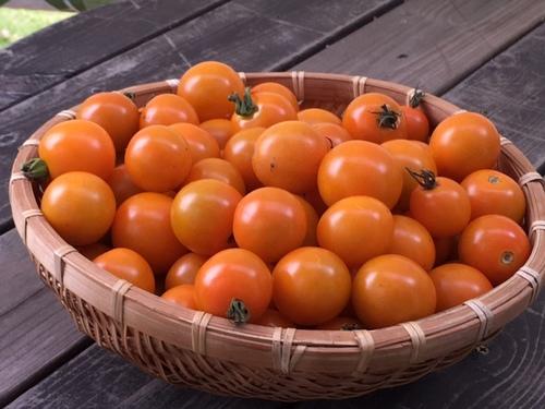 tomato26jul2016.jpg