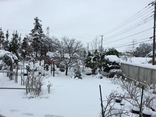 yuki18jan2016.jpg