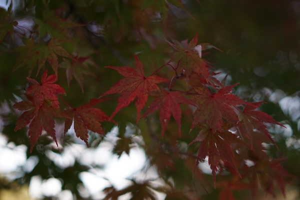 goshiki5.jpg