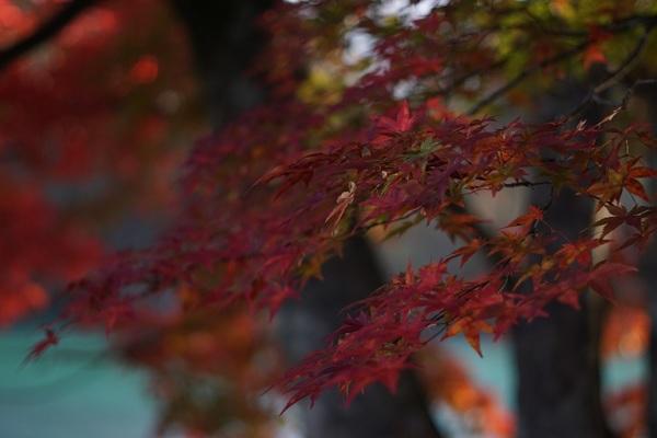 goshiki6.jpg