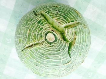 melon140729.JPG